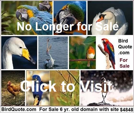 birdquote.com for sale
