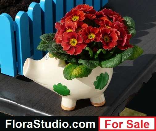 florastudio.com for sale