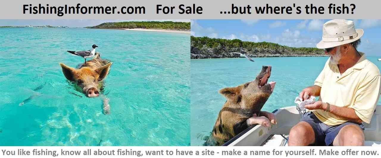 fishinginformer.com for sale