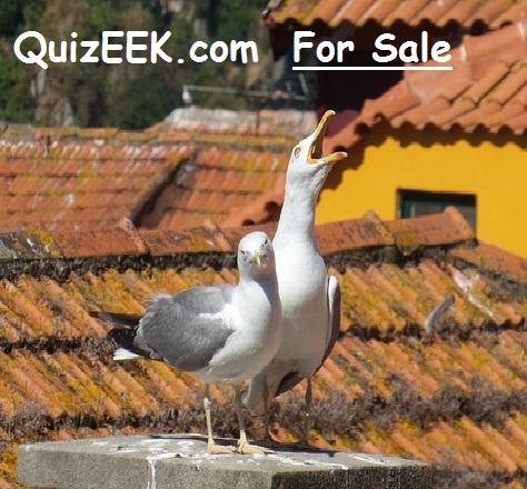 Quizeek.com for sale
