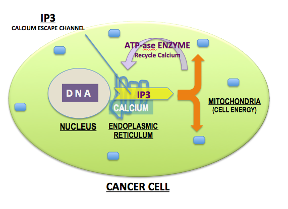 Killing Cancer Cells - LewRockwell
