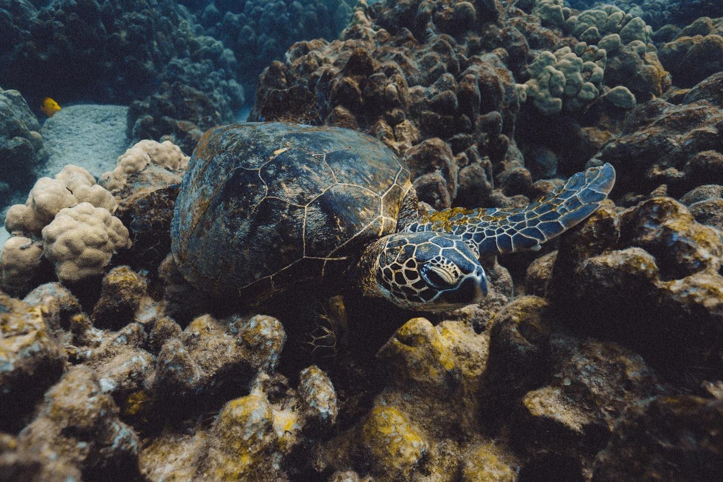 "<span class=""caption-true"">Sea Turtle</span>"