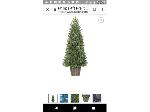 Lot: 56 - Potted Tree