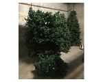 Lot: 3.FIN - (3) Christmas Trees