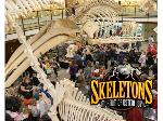 Lot: 11 - Two Admissions to Skeletons Museum of Osteology (Oklahoma City)
