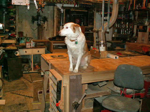 dog woodworking