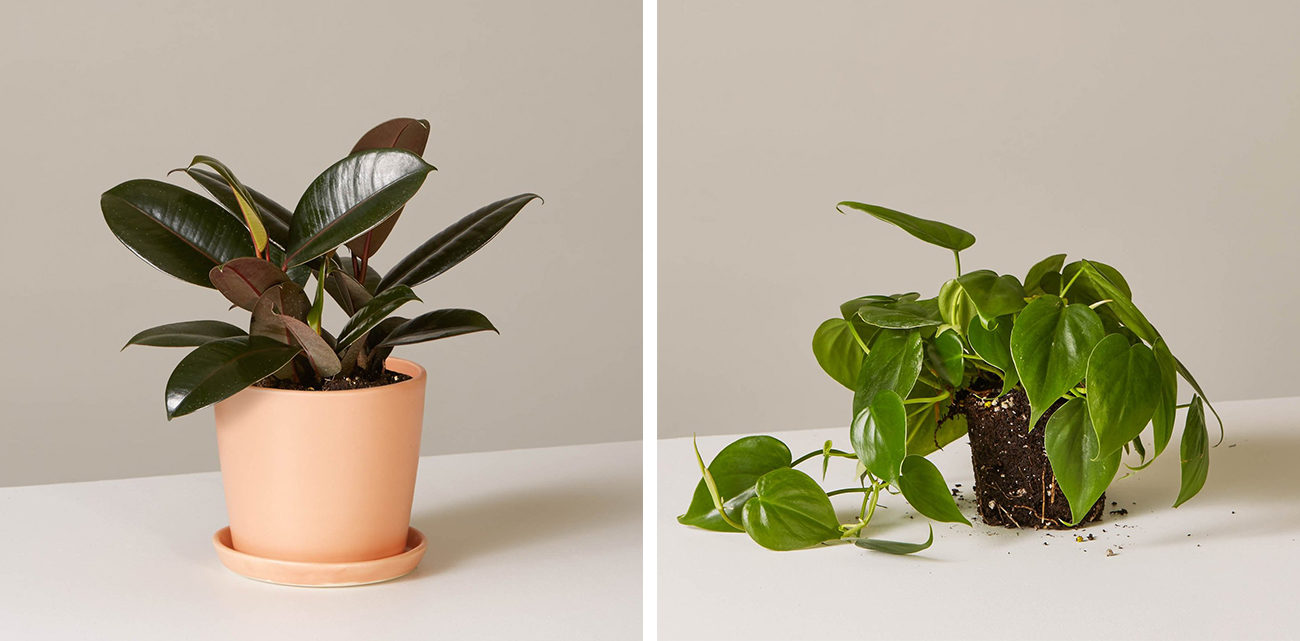 Cultivating a Modern Relationship with Plants