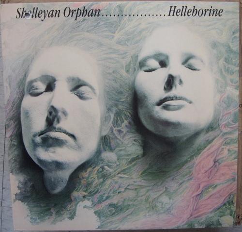 Shelleyan Orphan - Helleborine