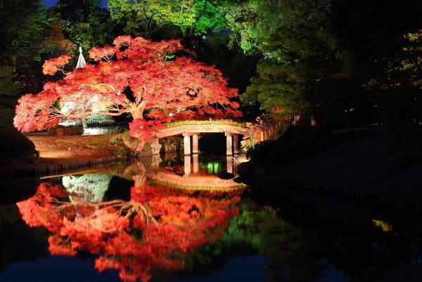 Leaf Spotting in Tokyo