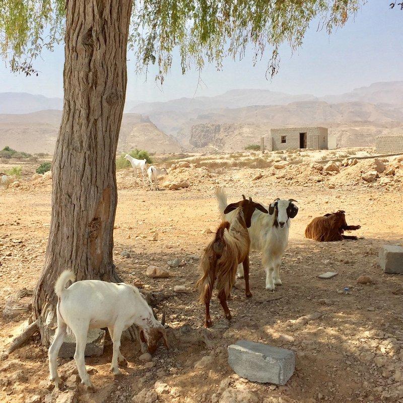 Shelley Dark Travel Oman1