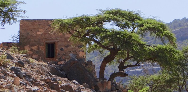 Shelley Dark Travel Oman9.jpg