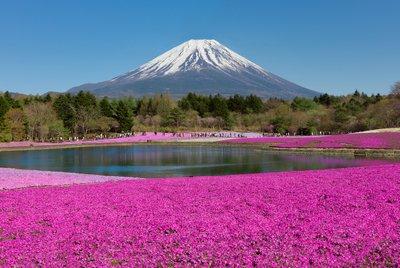 Tokyo's Spring Flower Festivals