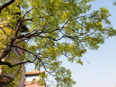 beijing botanic gardens1.png