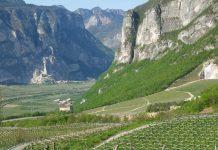 Alta Luna wines of Northern Italy