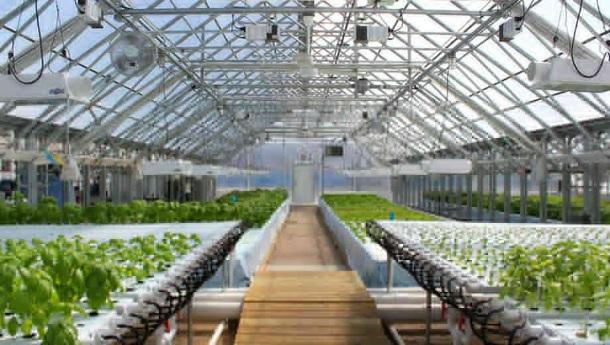 Greenhouse Tours at Metropolitan Farms
