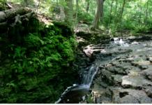 Waterfall Glen