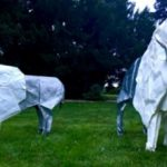 Origami in the Park