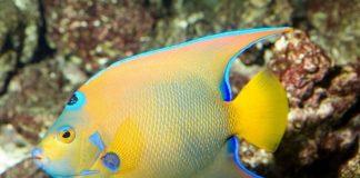 Shedd Aquarium Free Admission Days