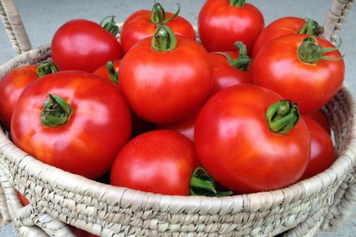 Tomato Bliss