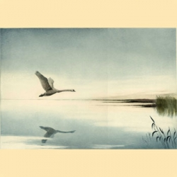 Lonely Swan Etching