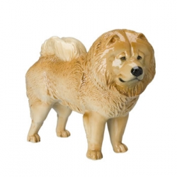 Standing Chow-Chow