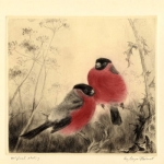 Bullfinches Etching