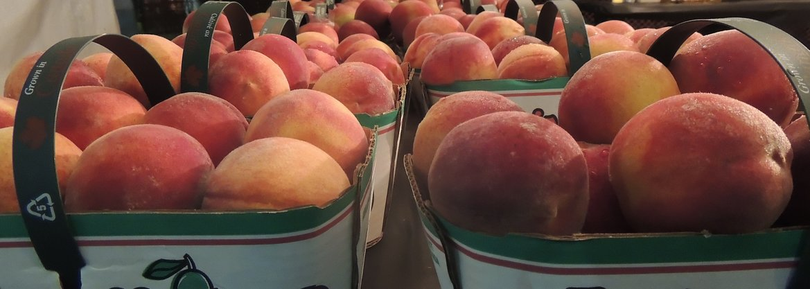 The Winona Peach Festival