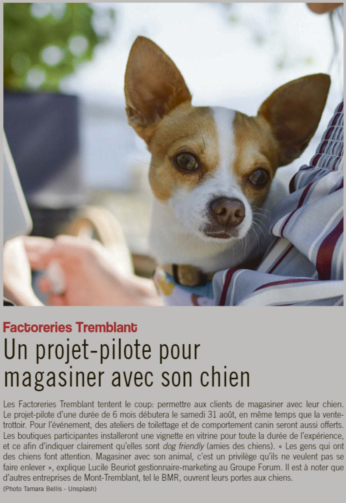 News Article - Dog Friendly Project