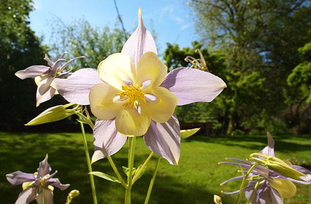 Ariaal Ashlie flowers