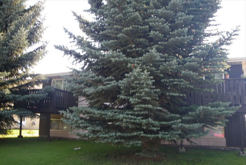 Red Deer Alberta Apartment For Rent