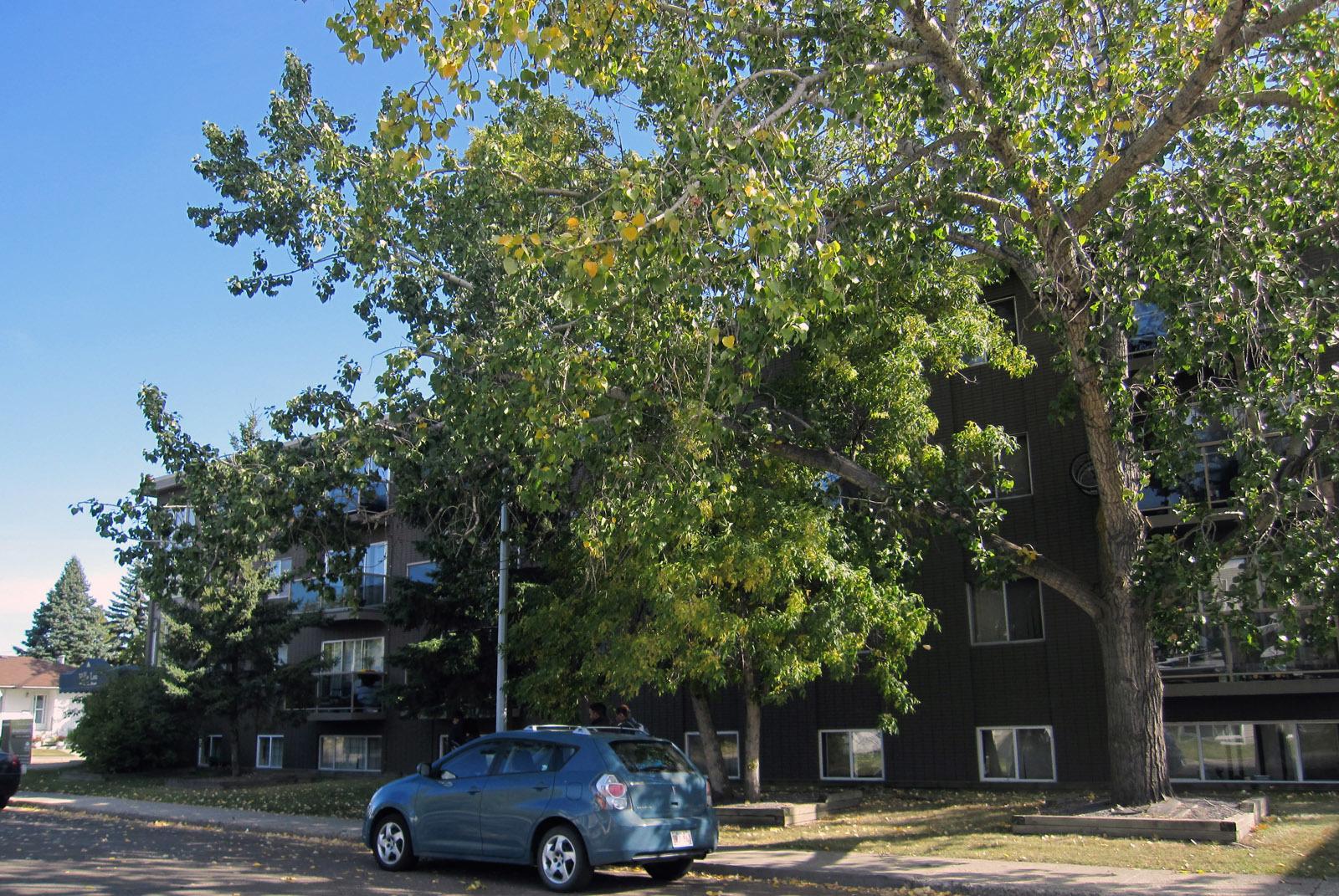 10155 153 Street NW, Edmonton, AB - $925