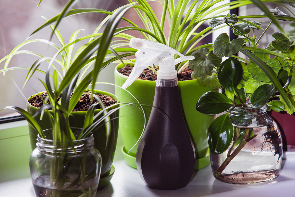 5 Easy Indoor Plants