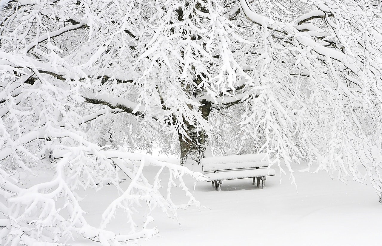 Post Image: Why We LOVE Wintertime in Guelph!