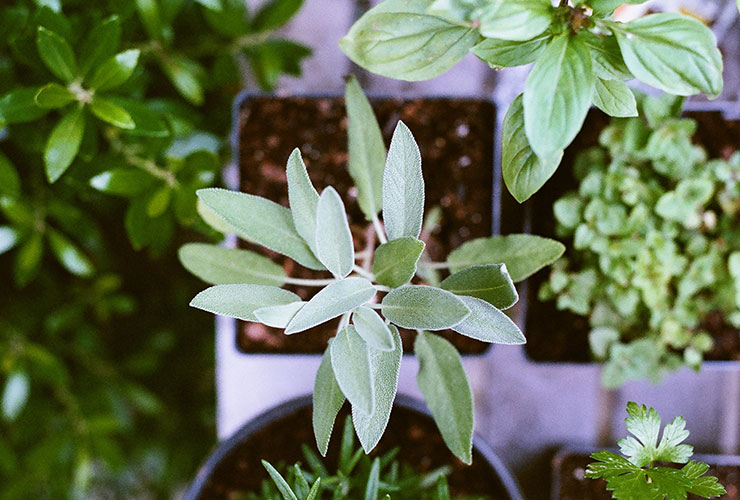 Post Image: Creating an Indoor Herb Garden