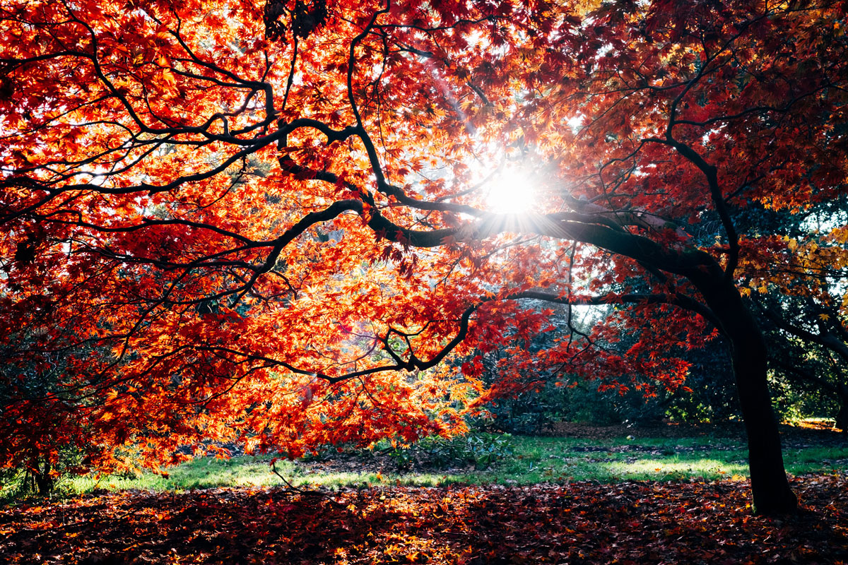 Post Image: The Best Parks for Enjoying Fall Foliage Near You