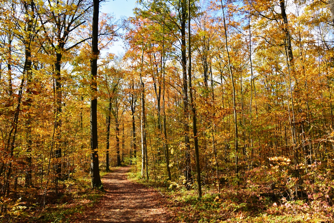 Post Image: Nature Trails to Explore this Fall