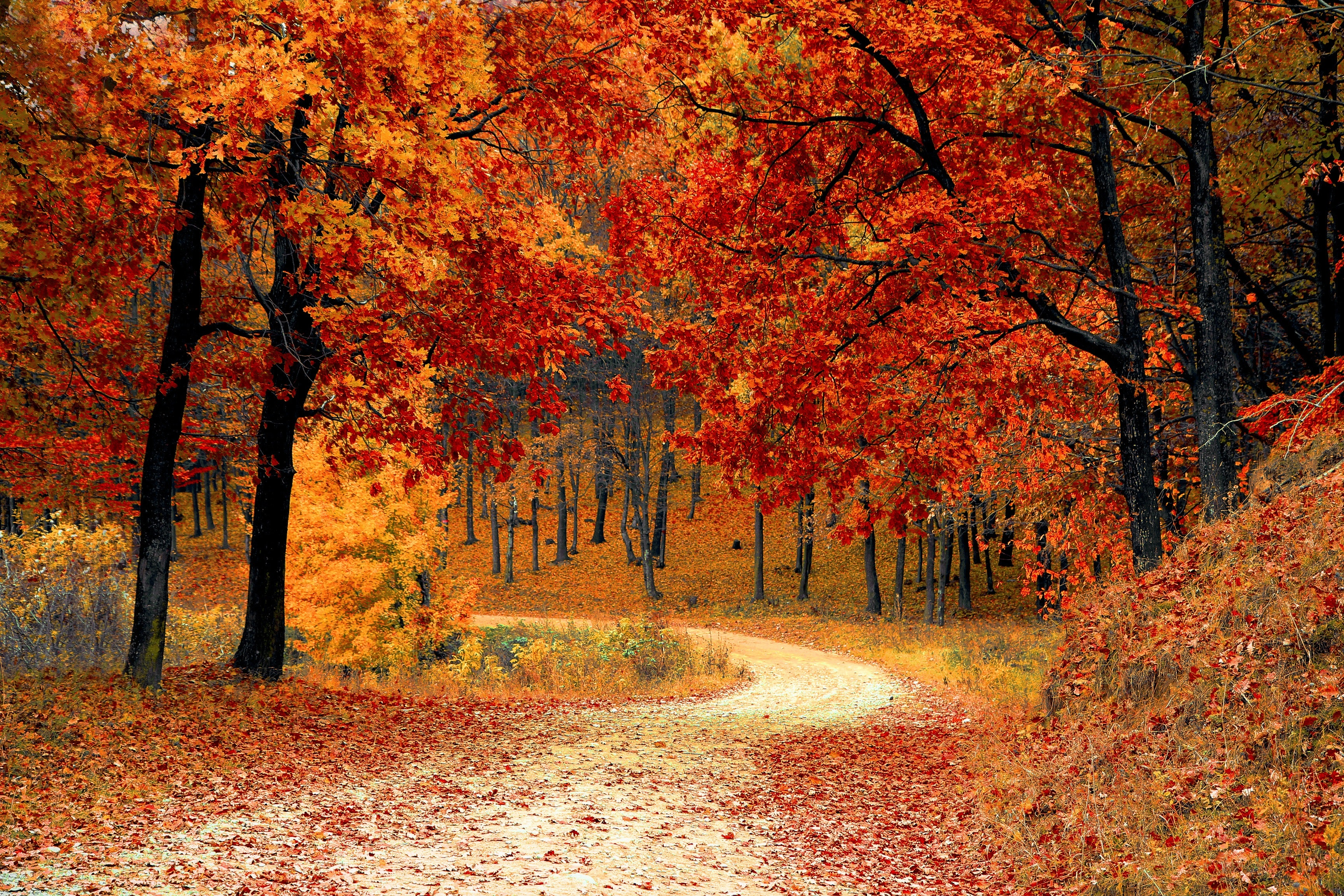 Post Image: The Best Spots in Ontario to See Fall Colours