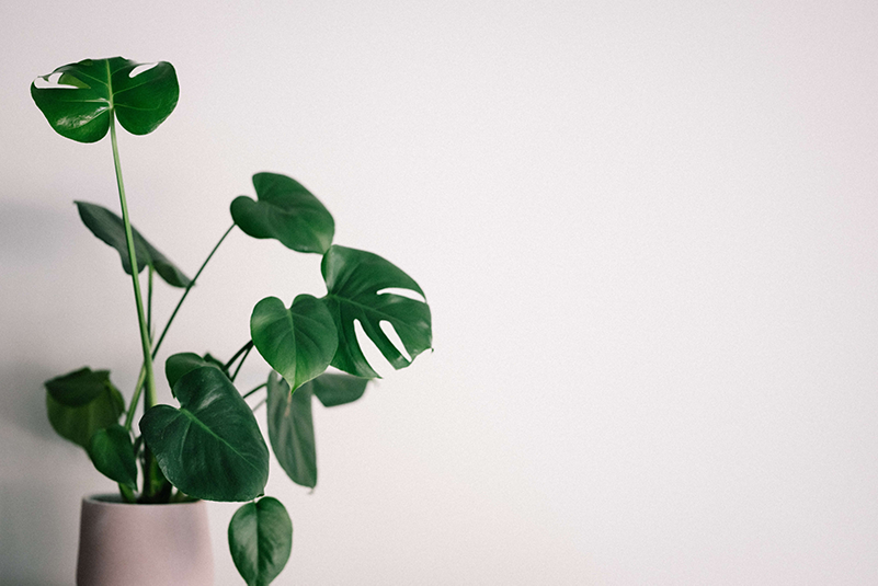 Plants to Liven Up Your Home