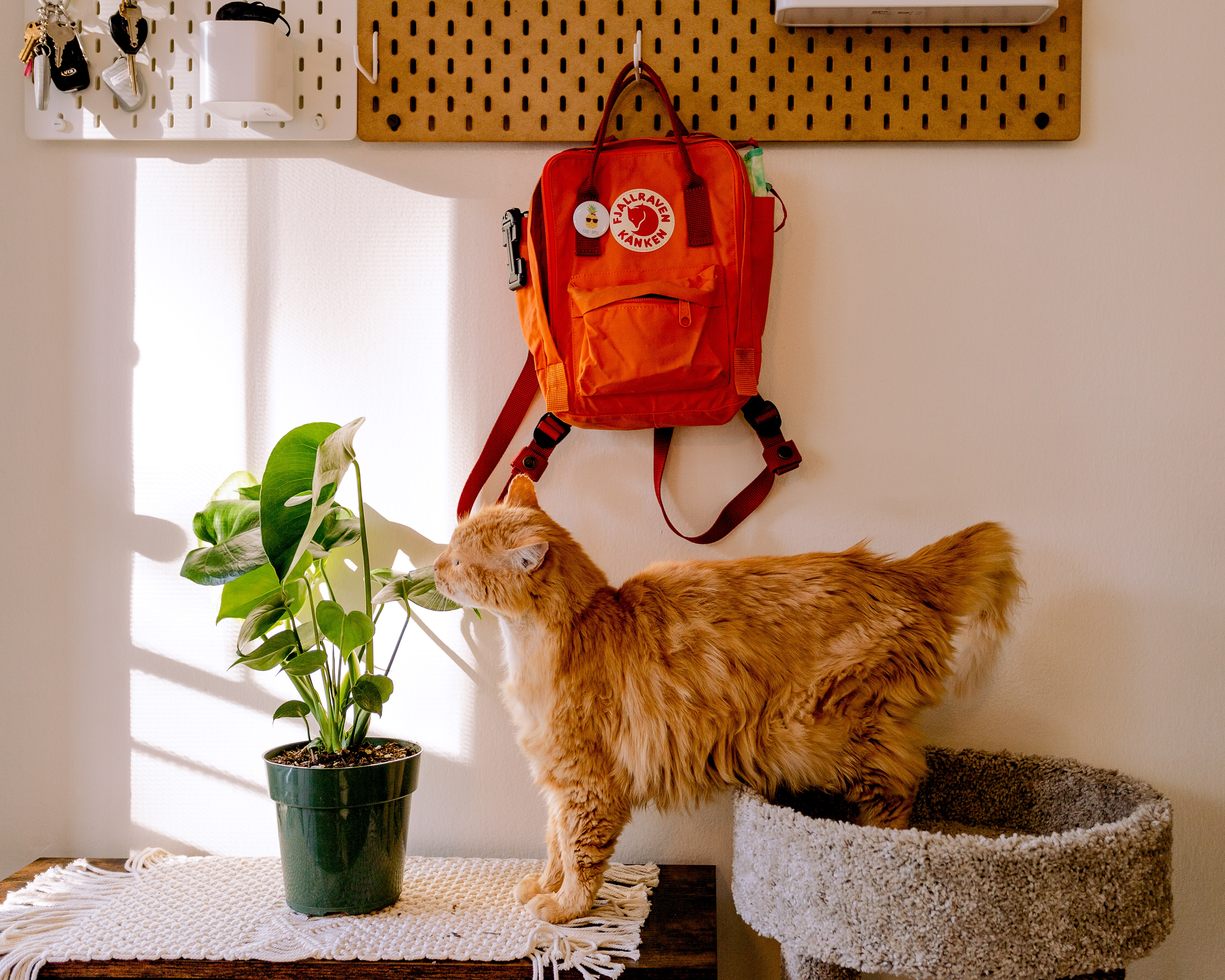 How to Prepare Your Apartment for a New Pet