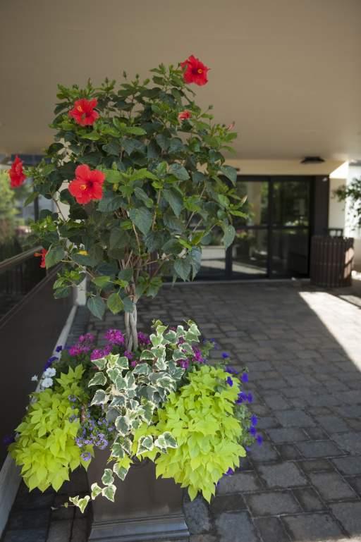 30 Esterbrooke Apartment Rentals