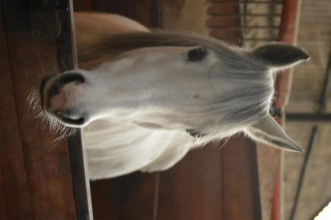 Mon cheval équitation équitation équitation