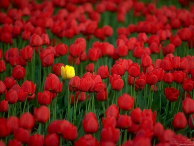 Mage'Hic Fleurs Fourges Mariage Entretiens de vos plantes verte Fleuriste à domicile