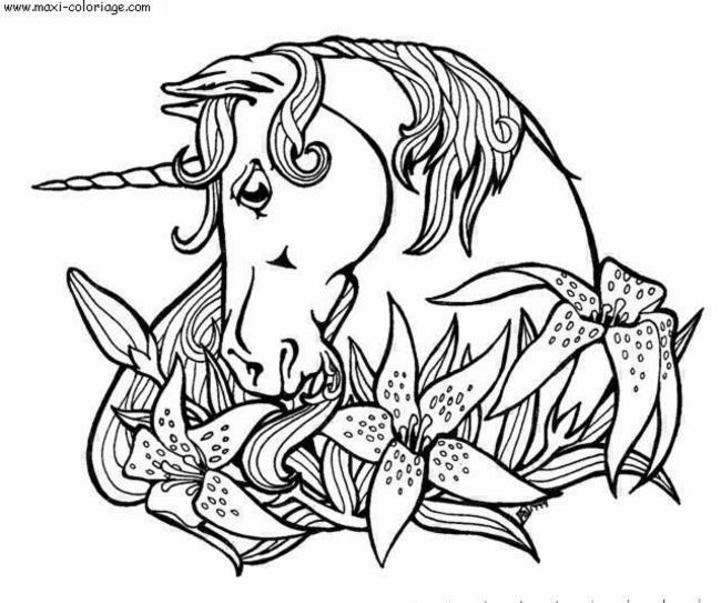 coco cy cheval cheval cheval