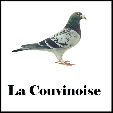 société colombophile couvin 88013 Couvin colombophilie colombophilie colombophilie