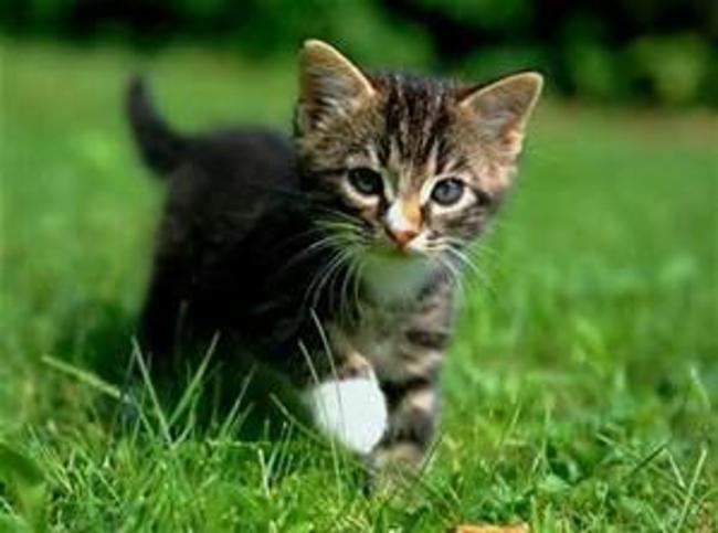 VIVELESCHATS Noms ou Prénoms pour les chats Noms ou Prénoms pour les chats Noms ou Prénoms pour les chats