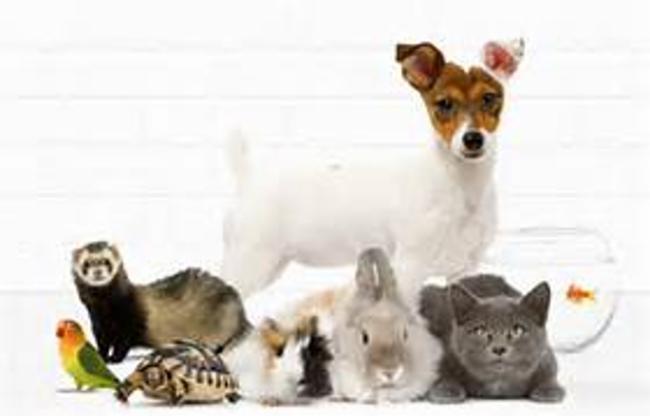 La patte du savoir veterinaire veterinaire veterinaire