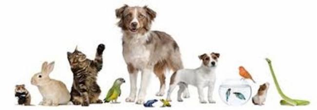 nounou pour vos animaux a 4 pattes Niort service pour animaux nounou pour animaux