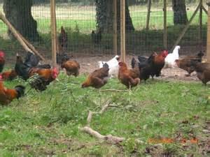 1 La vie a la petite ferme La-Ferter-Gaucher Animalier Animalier Animalier