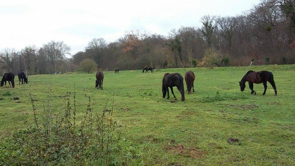 travail en securite avec les chevaux Lacroix Saint Ouen Prairie Philosophique travail en securite avec les chevaux