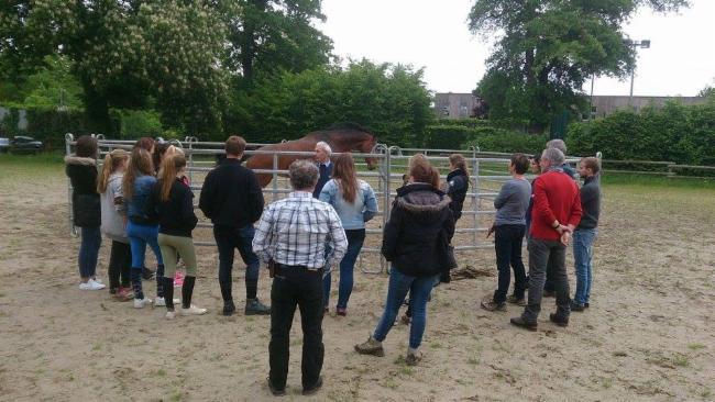 Nonant le Pin Prairie Philosophique travail en securite avec les chevaux ÉDUCATEUR DE CHEVAUX